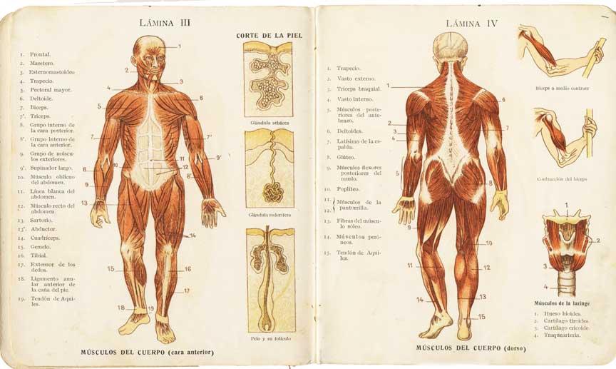 Magnífico Cuál Es La Relación Entre La Anatomía Y La Fisiología ...