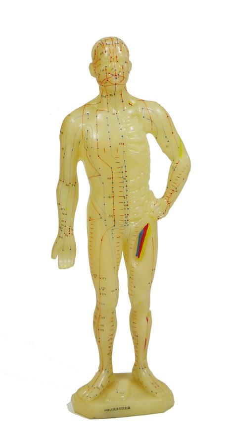 Modelo del cuerpo humano con los puntos de acupuntura y meridianos